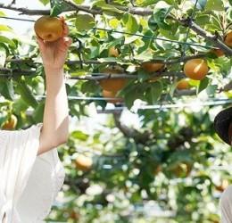"""Du ngoạn """"thiên đường"""" trái cây Đông Nam Bộ bằng xe du lịch"""