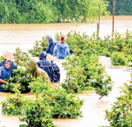 Xã trồng Mai lớn nhất Việt Nam hấp hối vì lũ