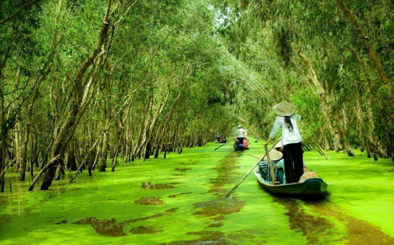 Du khách ngồi thuyền chiêm ngưỡng cảnh rừng tràm Trà Sư
