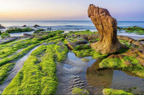 Bãi đá Cổ Thạch đầy huyền bí với rêu xanh